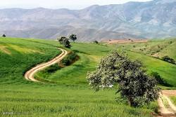 Green as grass fields