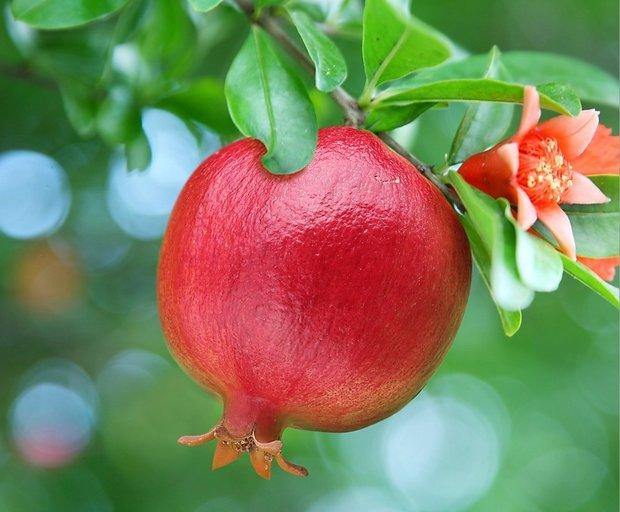 درمان طبیعی دیابت با شکوفه انار