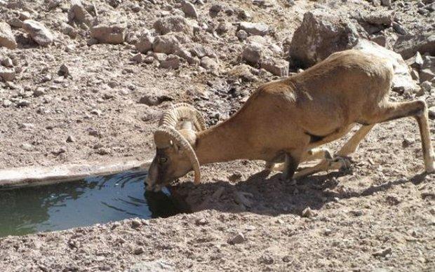 ساخت سه آبشخور حیات وحش، مجازات قانونی یک متهم