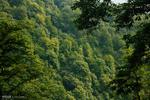 طبیعت روستای میلاش رودسر