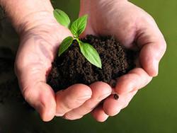 میزان مصرف سم در محصولات کشاورزی تولید استان بسیار ناچیز است