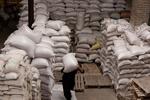 ۳۳هزار تن برنج در معرض فساد/ چوب فقدان تفکر سیستمی در دولت را بخش خصوصی میخورد