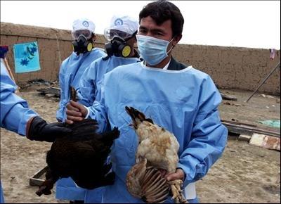 آنفلوانزای پرندگان در خراسان شمالی مشاهده نشده است,
