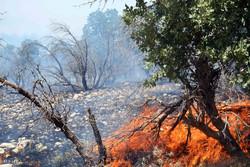 ۴۰هکتار جنگل بلوط سوخت/ نجات بزغاله از دل آتش