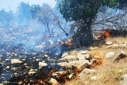 جنگلهای«دیل»به خاک سیاه نشست/مهار آتش دردمای۴۰درجه