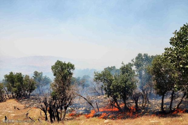 اخماد حريق اندلع في غابات ايلام غربي ايران