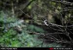 ارزیابان یونسکو برای ثبت جنگلهای هیرکانی به ایران سفر میکنند
