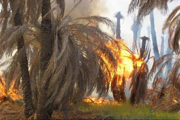 آتش سوزی در نخلستان