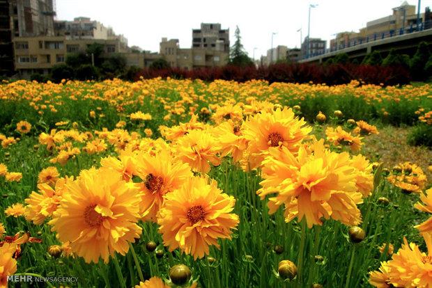 پل و پارک غدیر اصفهان