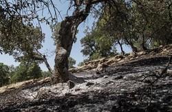 مهار آتش سوزی در منطقه حفاظت شده دنای شرقی
