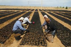 ۴۵۰ هزار اصله نهال در منابع طبیعی شاهرود تولید میشود