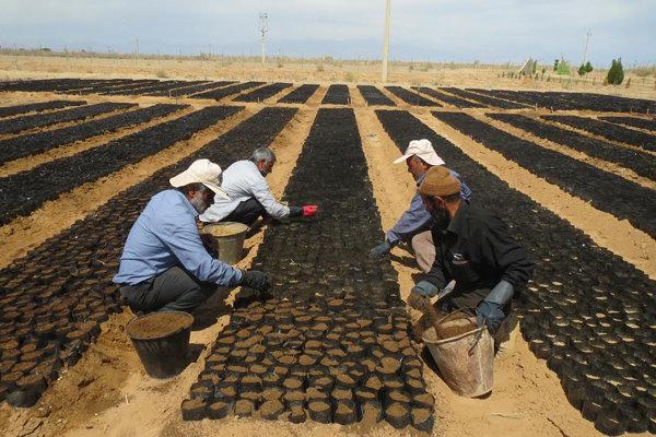 اجرای پروژه کپه کاری در ۱۰۰ هکتار از مراتع کلاته رودبار دامغان
