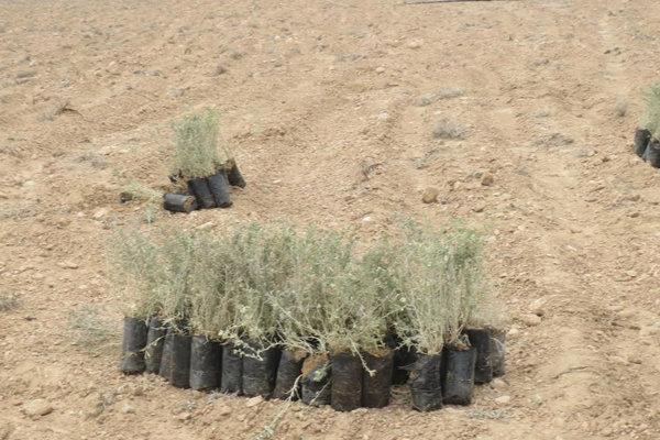 ۲۲۷ هزار هکتار اراضی ملی استان بوشهر نهال کاری شد