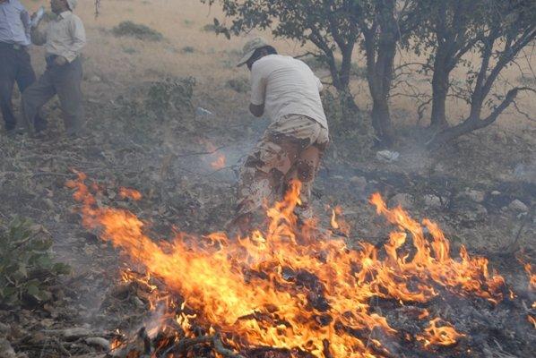 آتش در قلب ارتفاعات دراک بهمئی بر کالبد درختان می تازد