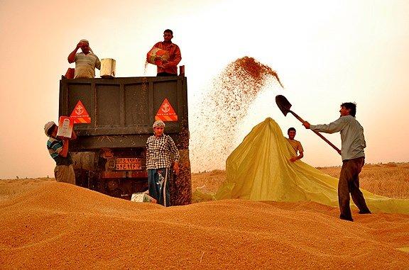 ۱۳۶۰ شرکت تعاونی تولید روستایی در کشور فعالیت می کنند