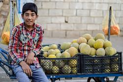 افزایش کودکان کار درکهگیلویه و بویراحمد/نرخ معلولیت بالاست