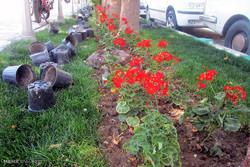 اصفہان میں پھولوں کی کاشت