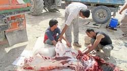 ۶۰ درصد بیماری های عفونی از حیوان به انسان منتقل می شود
