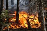 فصل آتش سوزی های جنگلی در غرب آمریکا