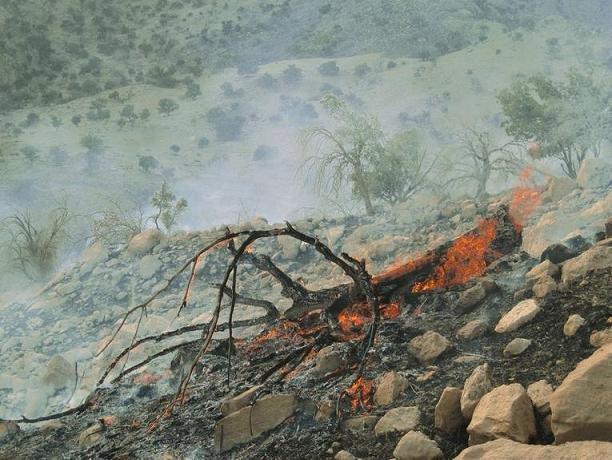 آتش در جنگلهای کوه سفید شهرستان لنده دوباره شعله ور شد