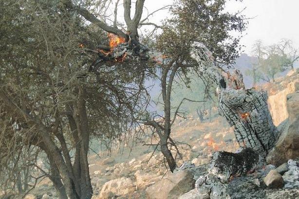 کراپشده - آتش سوزی جنگلهای پلدختر