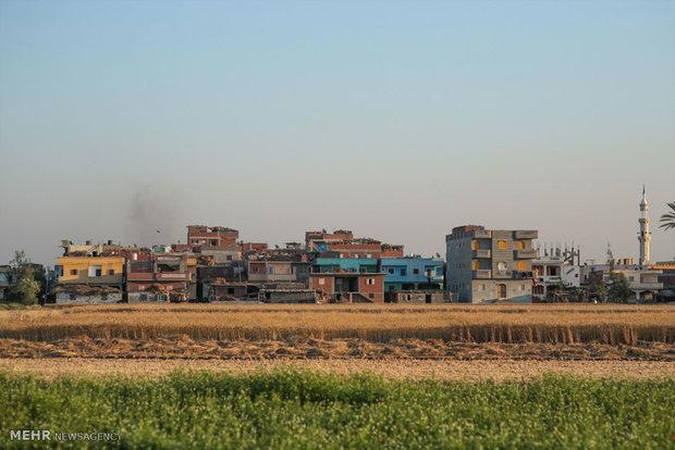 توسعه شهرنشینی در مصر