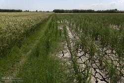 ۸۰ درصد آب ایران در کشاورزی مصرف می شود