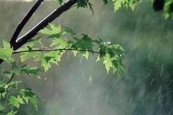 مانسون هندی؛ اشک آسمان را درآورد/تجربه سرما در دل گرما