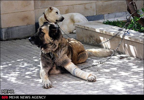 وقتی خانه ها زیستگاه حیوانات میشود/ حیوان دوستی یا حیوان آزاری