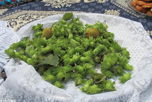 جشنواره شکرانه گل گاوزبان و فندق  در روستای گره گوابر اشکورات