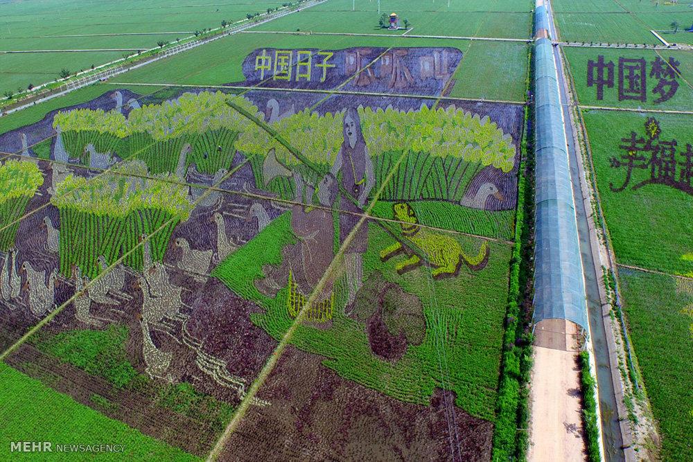 عکس/ بزرگترین نقاشی روی زمین