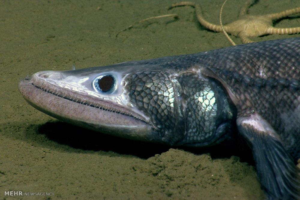 عکس/ یک ماهی عجیب