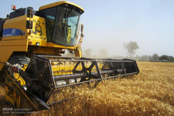 تعیین نرخ عادلانه برای خرید تضمینی، عامل کاهش قاچاق گندم