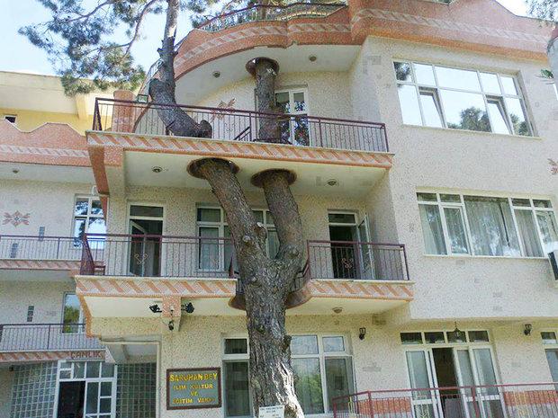 architecture-around-the-trees-1__880.jpg