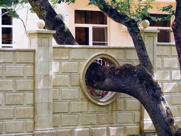 architecture-around-the-trees-5__880.jpg