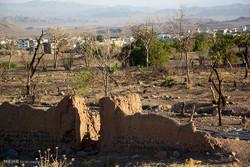 هویت سبز «محلات» در حال جان دادن/لزوم تشکیل کمیته بحران باغات
