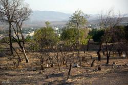 نابودی ۳۰ هکتار باغ در چادگان با خشک شدن چهار قنات