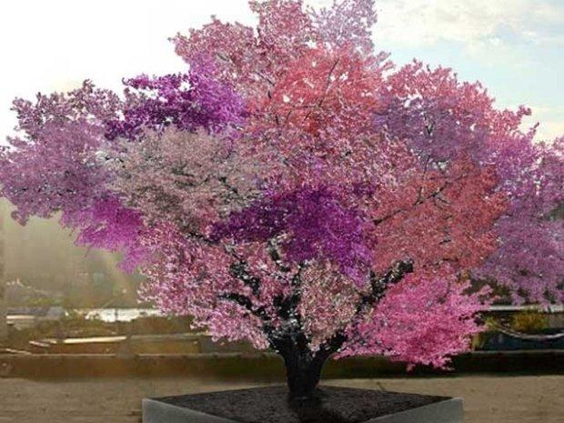 چالیس پھلوں والا درخت
