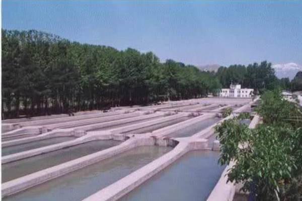 ۵۰۰ مزرعه آبزی پروری در استان زنجان فعال است