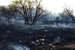 کراپشده - آتش سوزی جنگلهای لرستان