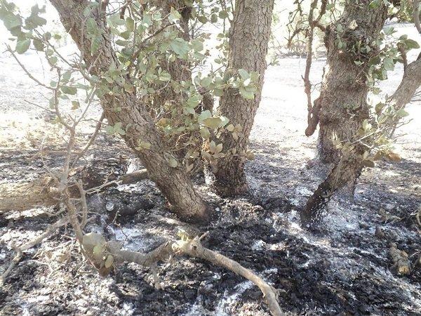 آتش سوزی جنگلهای لرستان