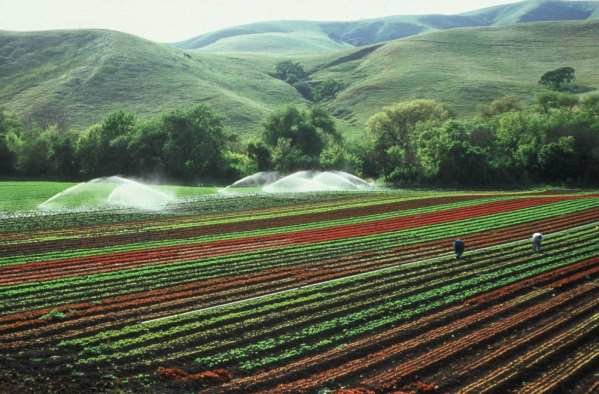 توقعات بإنتاج 300 طن من الزعفران العام الجاري