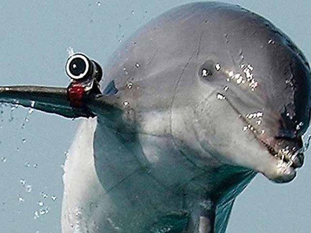 حماس کا اسرائیل کی جاسوس ڈولفن پکڑنے کا دعویٰ