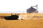 ۵۰۰ هزار تن ظرفیت ذخیرهسازی گندم در زنجان وجود دارد