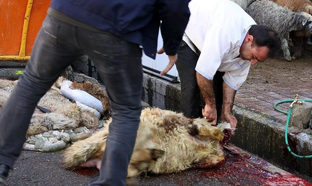 ذبح ۲۰۰ رأس گوسفند قربانی در بوشهر/ توزیع ۱۲۵ هزار بسته معیشتی
