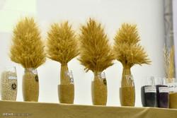 تولید ۱۰۰ درصدی ارقام بذر گندم و جو در داخل کشور