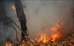 حريق في محافظة فارس يلتهم 2500 هكتار من غابات باساركاد