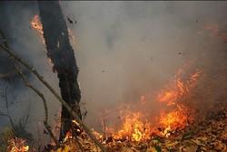 جنگلهای تولگهی بویراحمد در آتش میسوزد/مهار آتش ادامه دارد