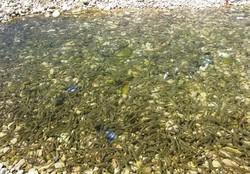 نجات ۲۰ هزار قطعه ماهی به دام افتاده در رود بشار یاسوج