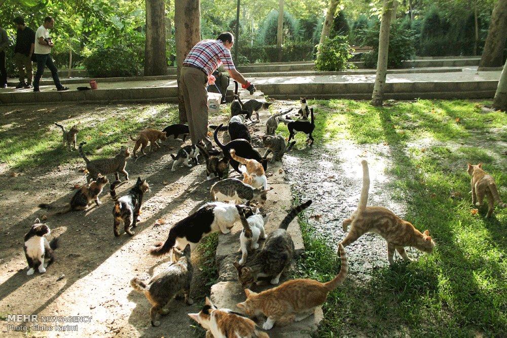 عکس غذا دادن به حیوانات
